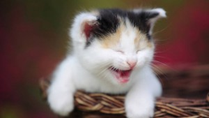 autism-swim-lessons-cute-kitten